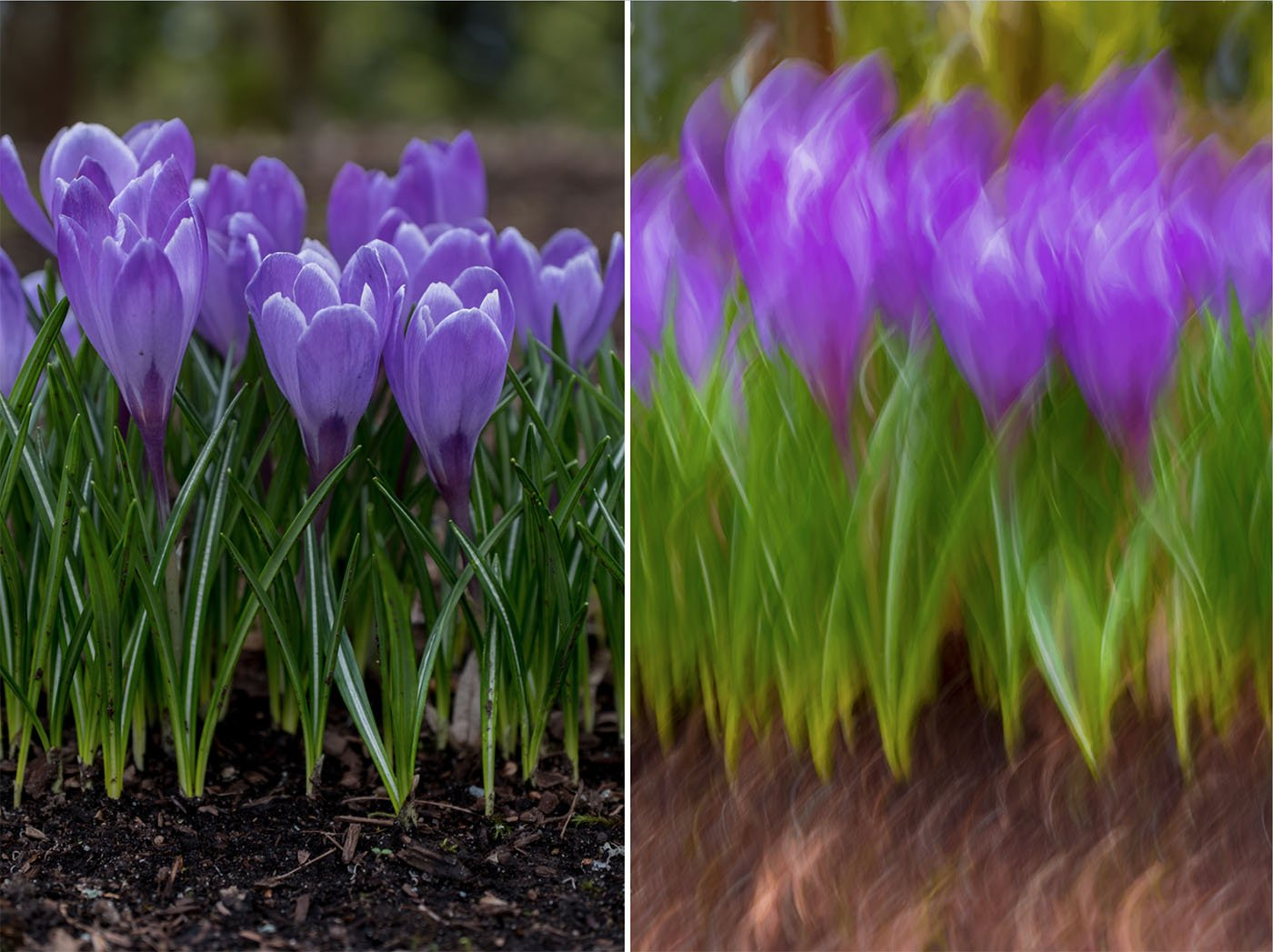 creativity with crocuses