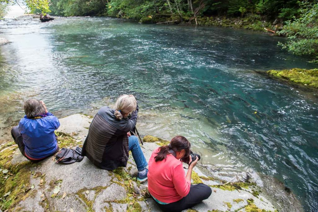 Watching the salmon spawners at Develop Your Creative Vision photography workshop, Bella Coola BC Canada.